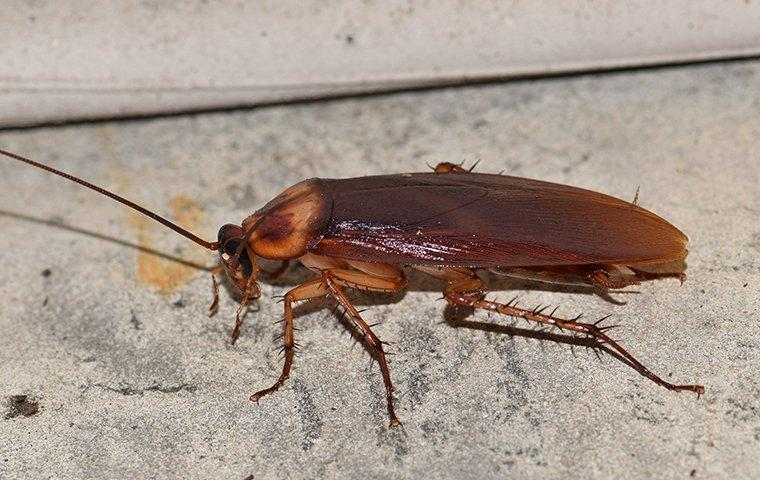 cockroach crawling in a basement