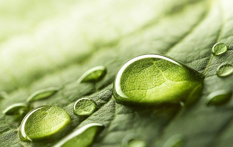 green eco-friendly pest control
