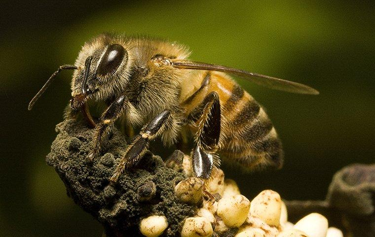 bee up close on plant