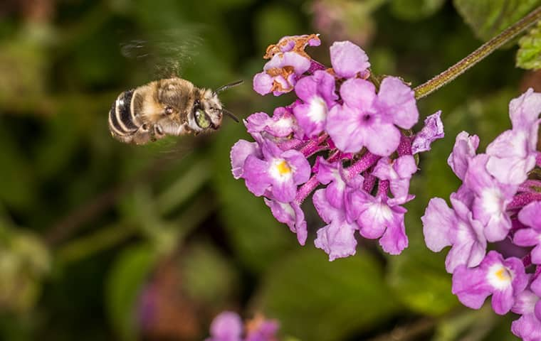 bee an purple flower