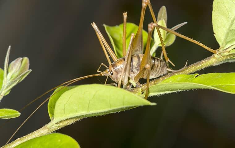 cricket on plant