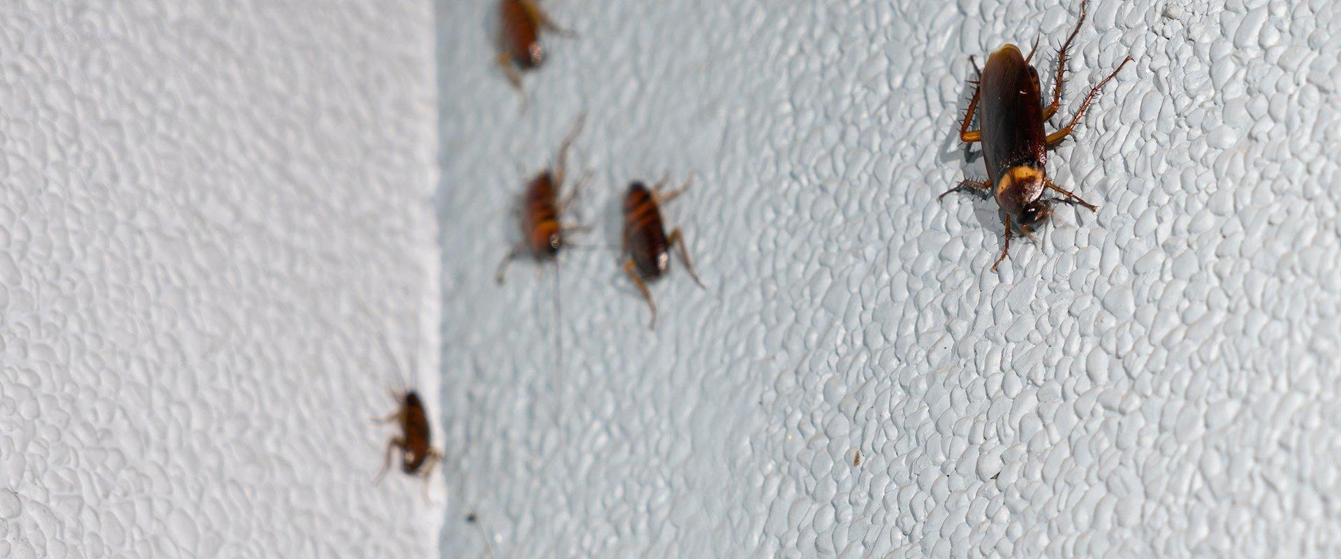 cockroach on a bathroom wall