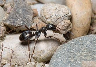 an ant crawling on a property in connecticut