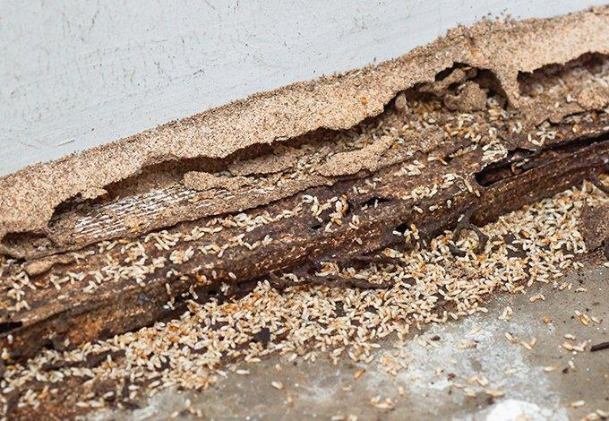 termite damage in home in north castle new york