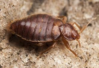 a bed bug crawling in a connecticut home