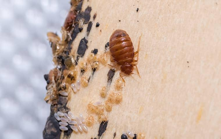 call parkway to get rid of your bed bugs