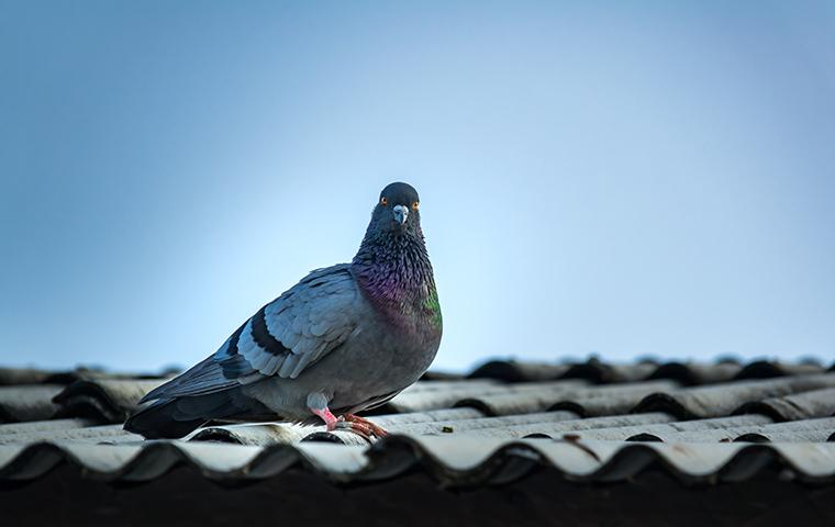a pigeon perched on top of a building in new york
