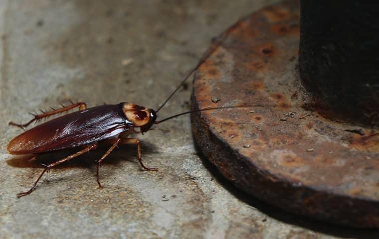 cockroach near drain