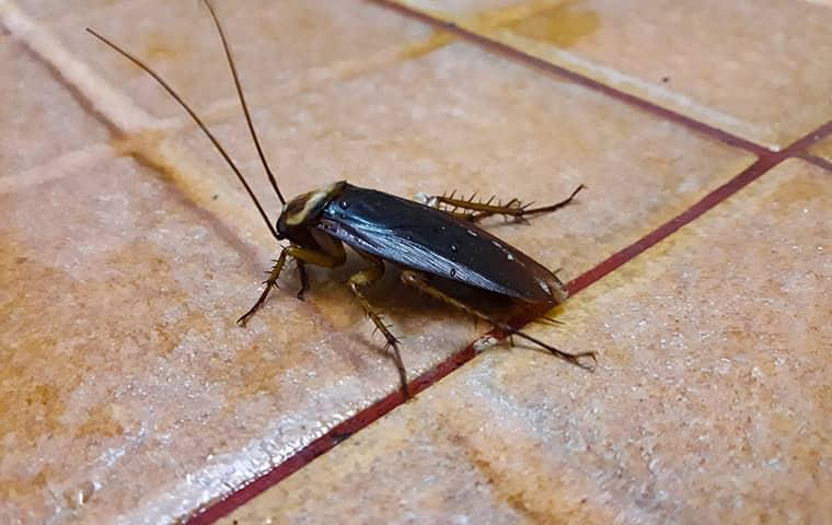 cockroach crawling on tiled kitchen floor