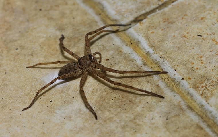 spider on a kitchen floor