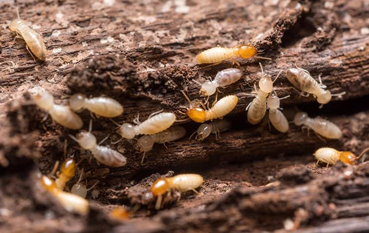 termites gathered in a log