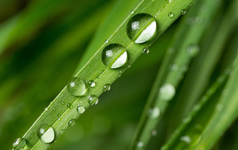 a plant leaf with water droplets on it