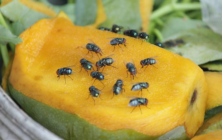 flies gathered on food
