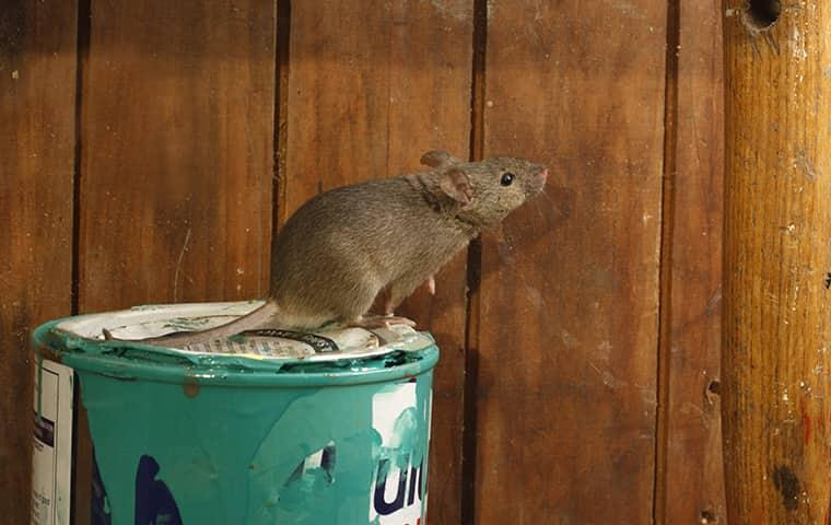 get mice out of your new york home