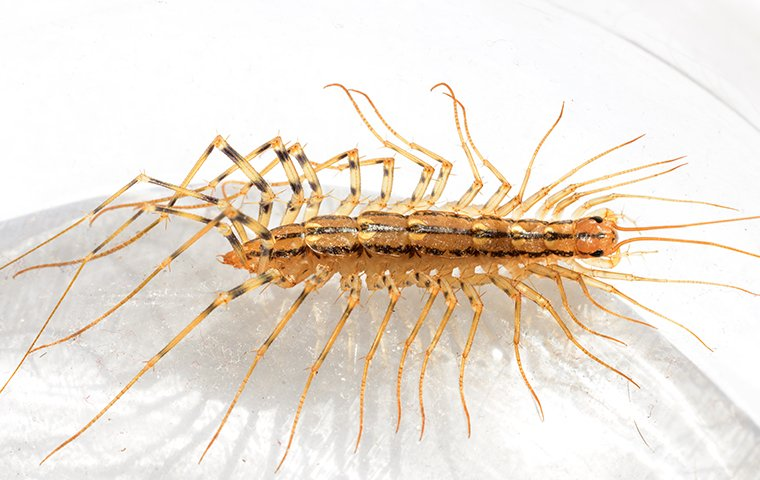 a house centipede crawling in a bathroom