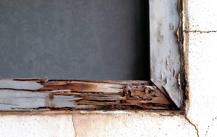 window frame destroyed by termites