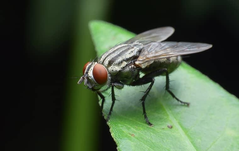 fly sitting on leaf