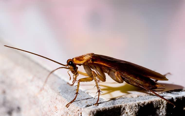 close up image of a cockroach