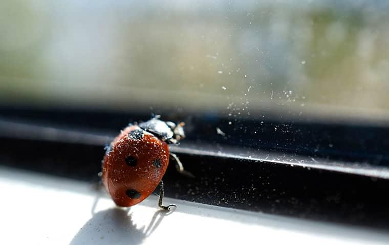 lady bug crawling on a new york home window