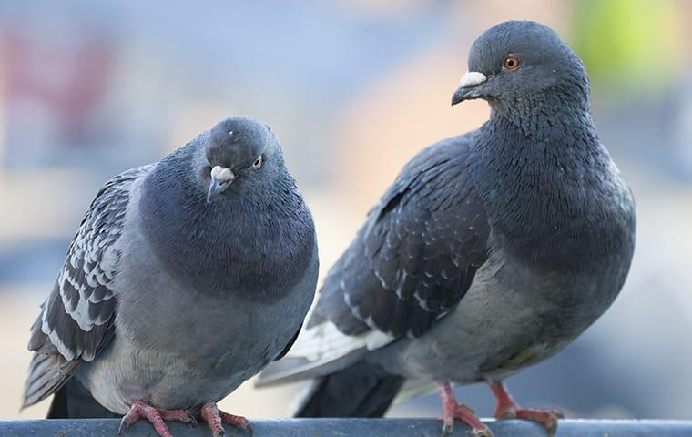 pigeons on sitting on top of building