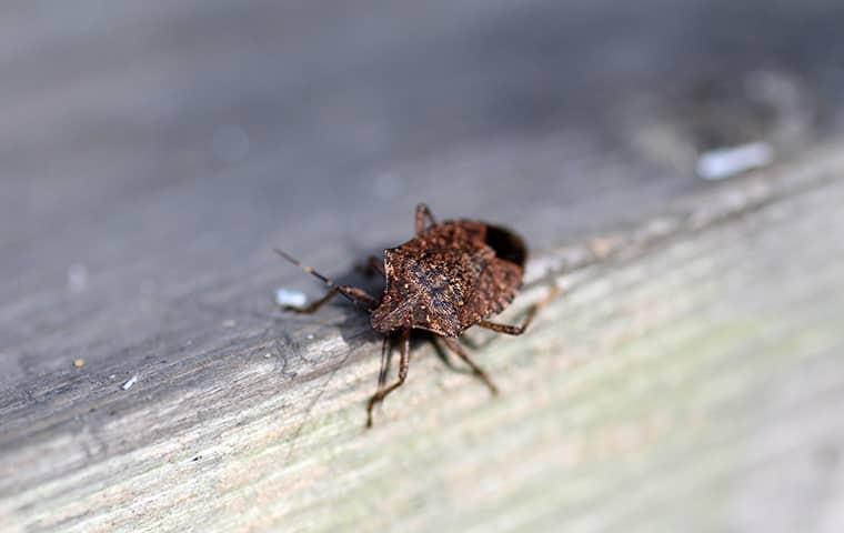 stink bug crawling on a home window