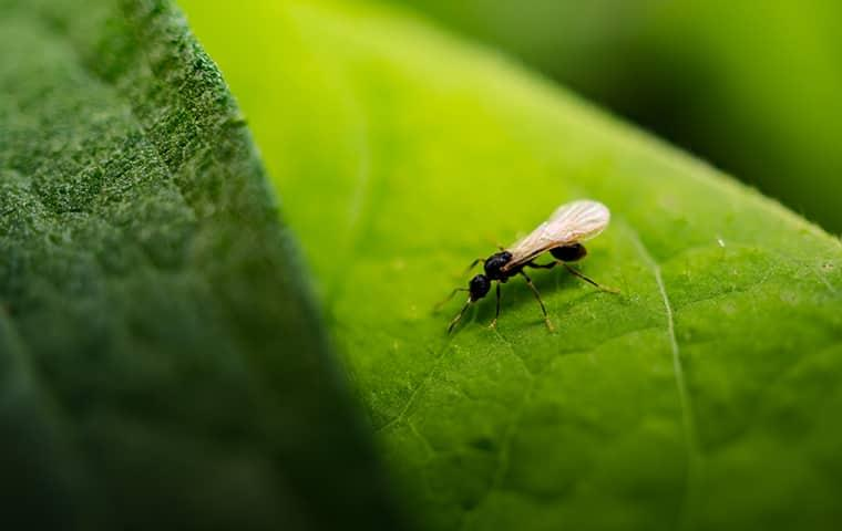 small flying ant on a leaf