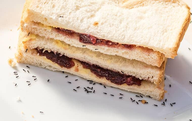 ants eating peanut butter and jelly sandwich