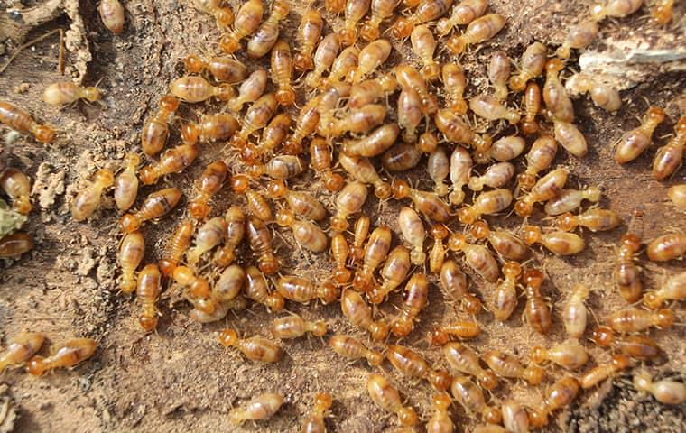 termite swarm on a new york home