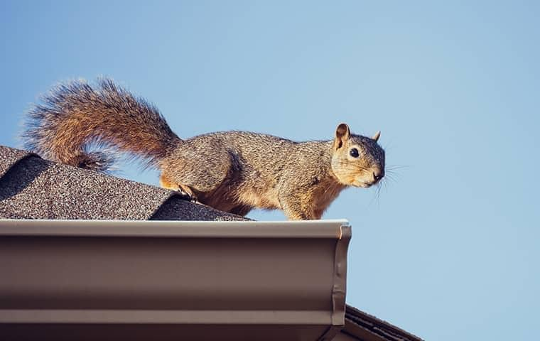 a squirrel on a rooftop in new york