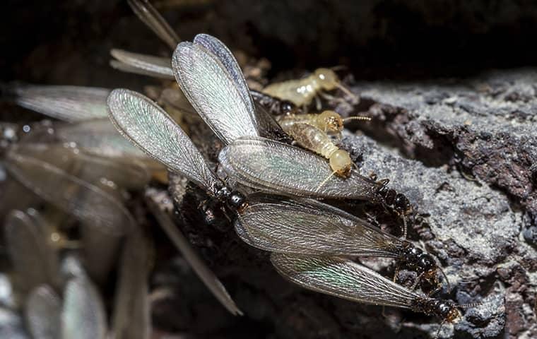 termite swarm on a rock