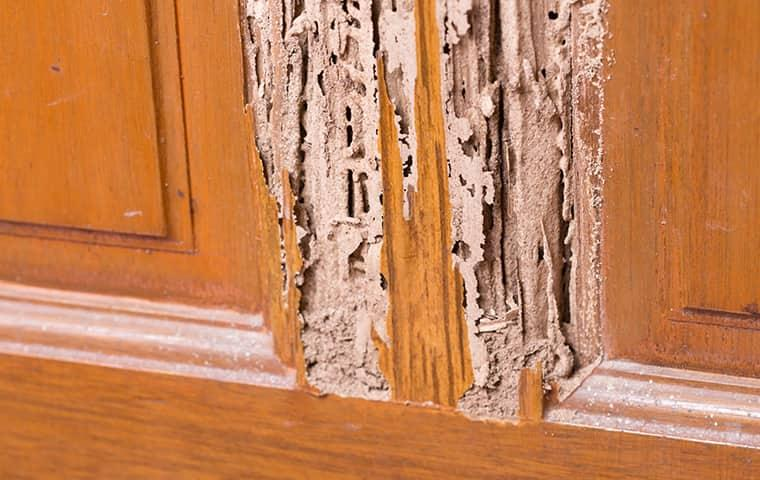 get a termite inspection to protect your home