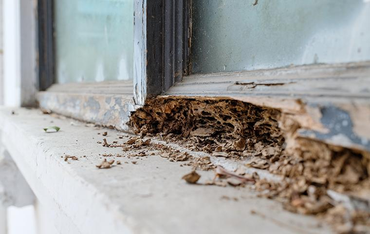 termites in new york