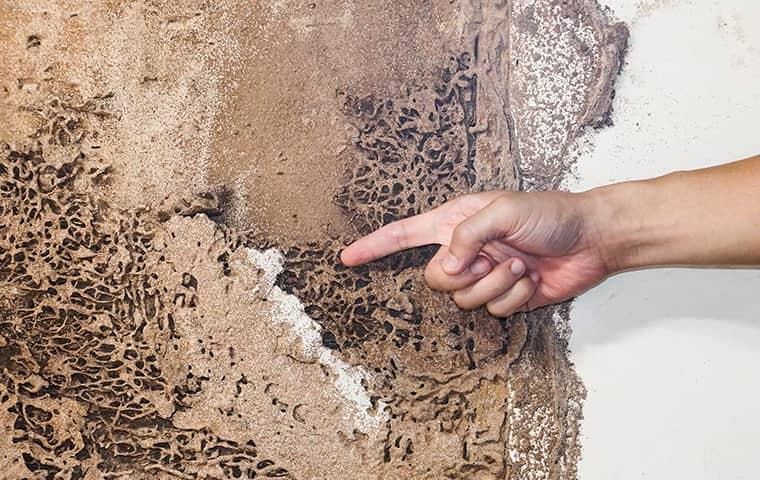 man inspects termite damage done to a home