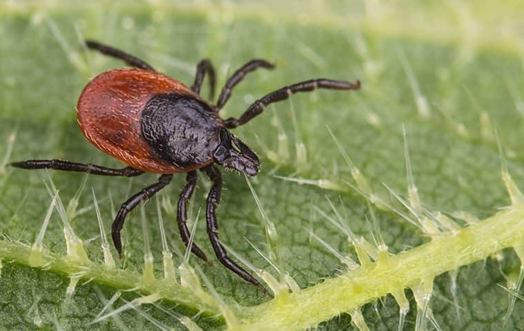 beware of ticks in greenwich ct