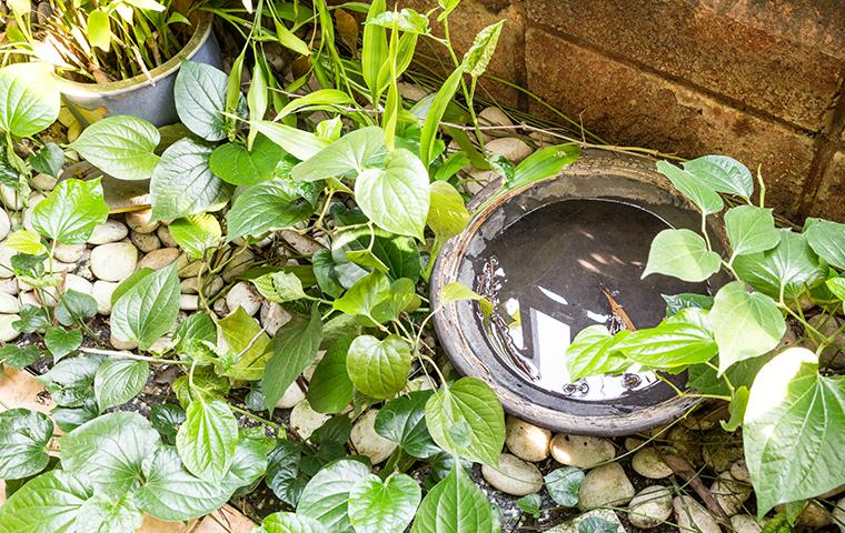 a bird bath filled with water in a westchester county backyard
