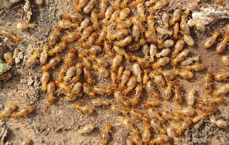 termite protection is essential for your new york home