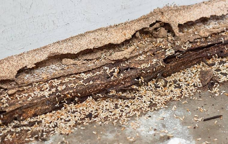 get a termite inspection for your new york home
