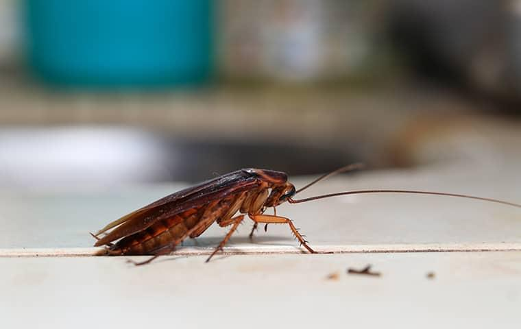 cockroach on a kitchen counter top