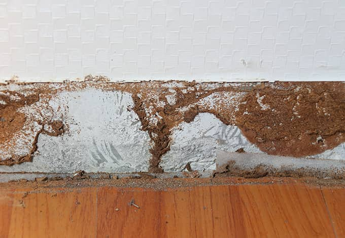 damage created by carpenter ants in ny home