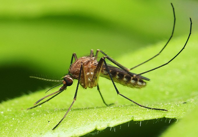 a mosquito on a leaf in cedarhurst new york
