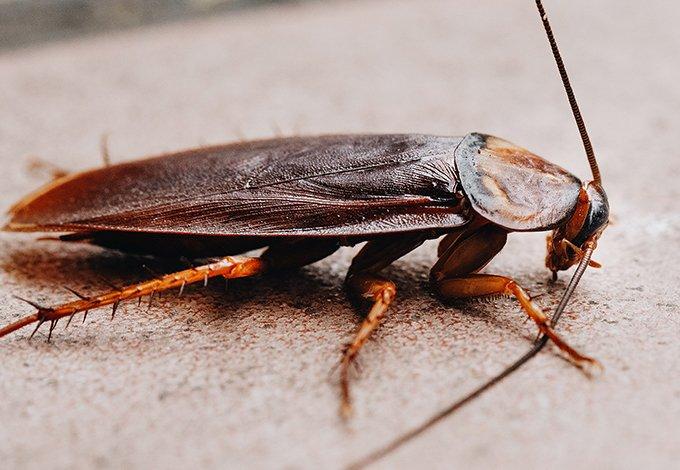 cockroach crawling on floor