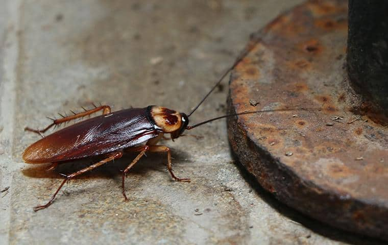 a cockroach near a drain in nassau county new york