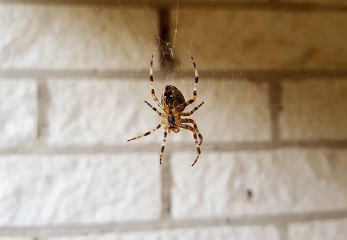 a spider hanging on its web outside a new york home