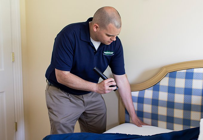 a parkway pest control technician checking for bed bugs in a pelham new york home