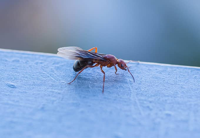 a flying ant in a long island home