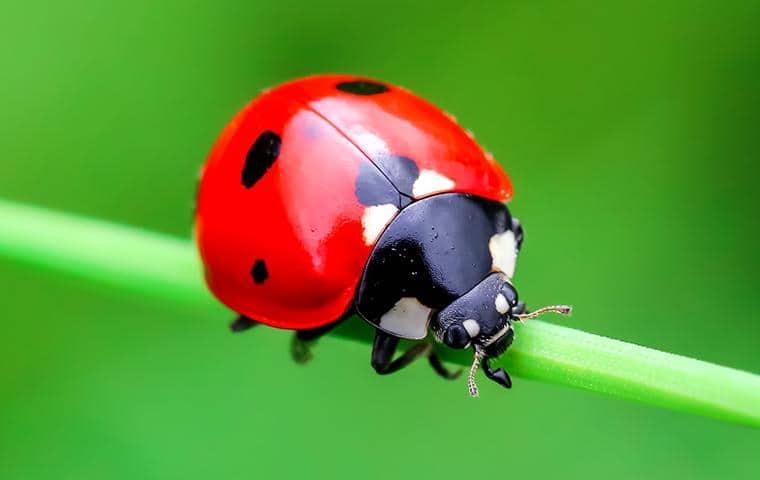 a lady bug on a stem outside a nassau county home