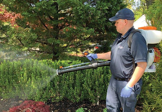 long island pest control tech treating yard for mosquitoes