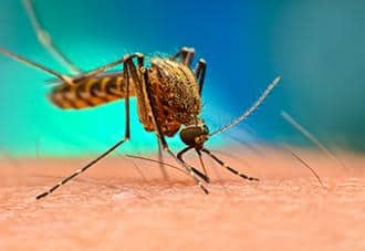 a mosquito stinging a persons arm in suffolk county