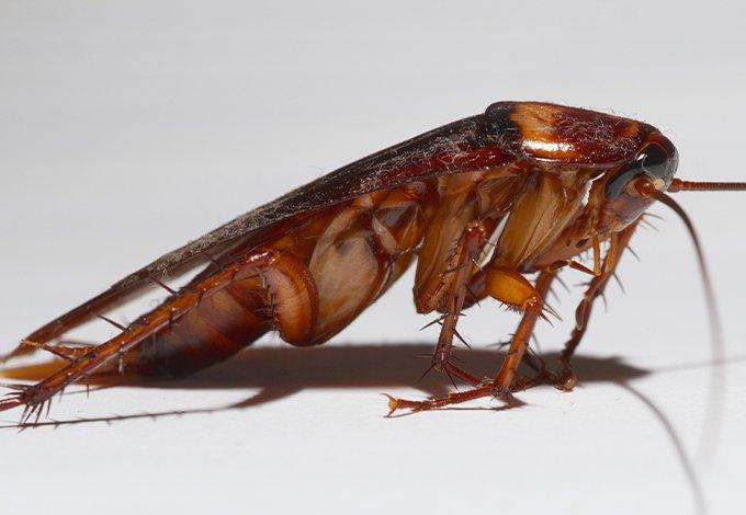 up close image of a cockroach