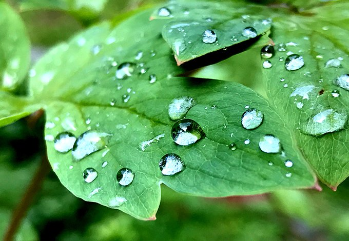 dew drops on leaves in a yard using green pest control in new castle new york